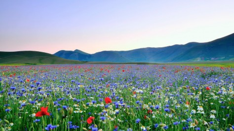 meadow-flower-images-and-wallpapers-1